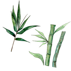 Bamboo tree in a watercolor style isolated. Aquarelle wild bamboo tree for background, texture, wrapper pattern, frame or border.