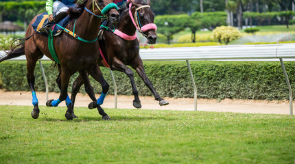 Horses running past on the racetrack