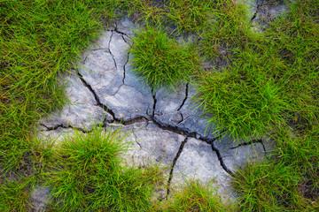 closeup green grass growth on a saline land natural background