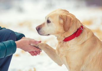 A human and a dog are best friends. The  man with the dog sitting in a snowy field in winter. Trained  labrador retriever extends the paw to the man