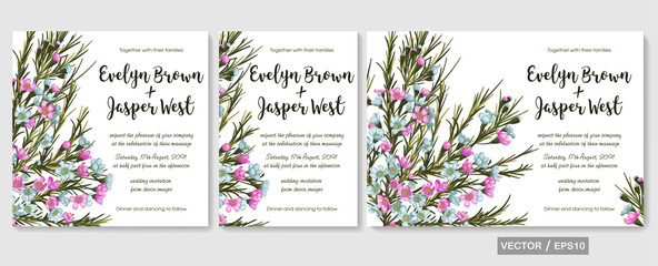 Vector floral watercolor design: pink and blue chamaelaucium (wax flower) card set. Background for banners, invitation, greeting cards, flyers, wedding menu, save date