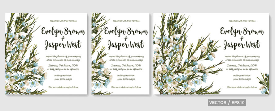 Wedding invite invitation menu card vector floral greenery design: chamaelaucium (waxflower) blue and white flowers pattern. Watercolor elegant hand drawn set