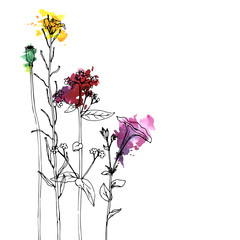 Vector drawing herbs and flowers