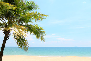 Coconut beautiful on the beach with evening In tropical countries summer Copy space
