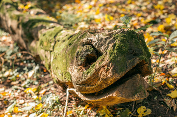 The fallen tree trunk in the forest is like a snake, boa constrictor. Nature photography.