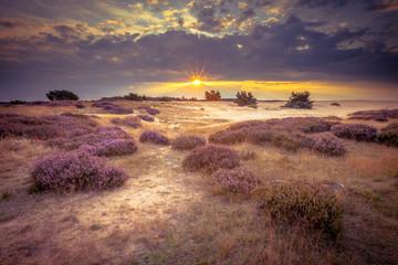 Hoge Veluwe Sand Heathland in retro colors