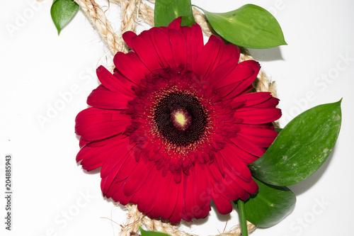 flor gerbera de color rojo con hojas verdes stock photo and