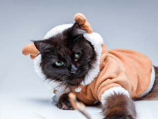 Picture of black cat in deer suit
