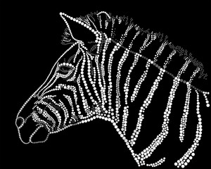 Zebra on a black background