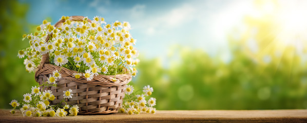 Basket of chamomile flower