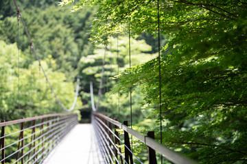 Bridge in the summer