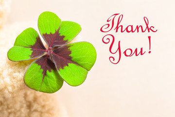 Lucky Greeting Card Image Motif / Big four-leaved multicolored clover leaf at hand of teddy bear with red written words THANK YOU! (copy space)