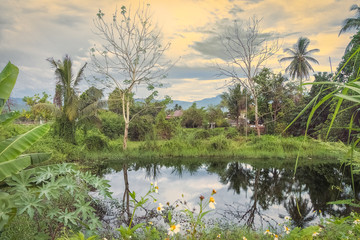 Lovely romantic picture of tropical pond with reflections and palms in Thailand