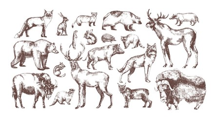 Collection of elegant drawings of European forest animals isolated on white background. Bundle of herbivorous and carnivorous mammals hand drawn in vintage engraving style. Vector illustration.