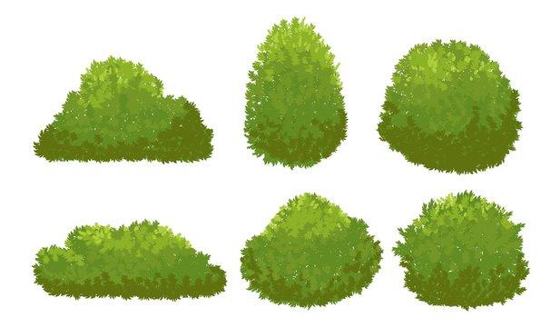Garden green bushes. Cartoon shrub and bush vector set isolated on white background