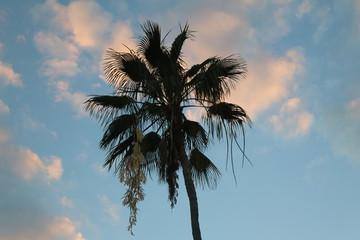 Sunset, Sky, Palm tree
