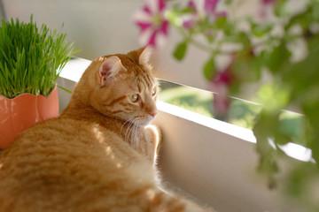 Katze auf einem mit Balkon