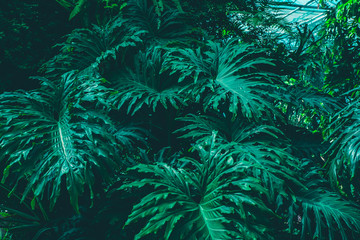 Lush tropical leaves texture