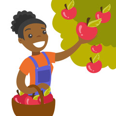 A black woman collects apples from an apple tree in a garden into a basket. Harvest season. Gardening and farming concept. Vector cartoon illustration isolated on white background.