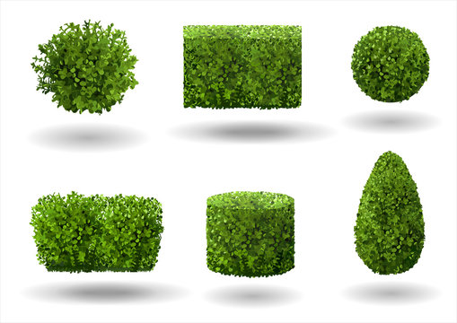 Set of ornamental plants and trees for landscaping. Vector graphics. Boxwood, hibiscus and arborvitae tree.