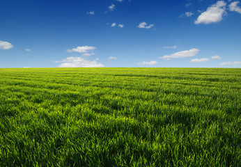 Wall Mural - green field and clouds