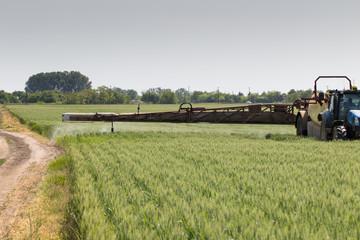 Wheat spraying