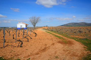 Fields with vines for grape crops in Valdepeñas.