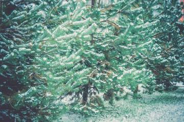 Evergreen tree under snow retro