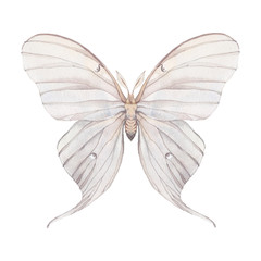 Watercolor butterfly. Hand drawn insect close up isolated on white background. Natural illustration of Tropaea Luna moth