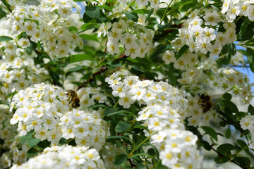 white flowers with green