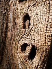 tronc bois