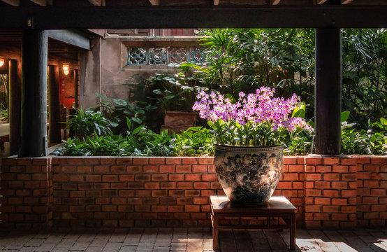 Tropische Blumen: Orchideen in dekorativem großen Topf vor Backsteinmauer im Gegenlicht