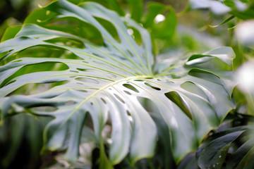Lush tropical vegetation of the islands of Hawaii