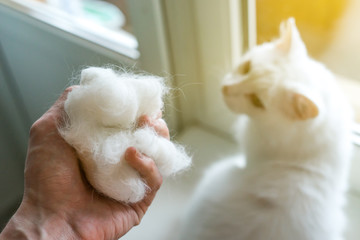 wool in a man's hand against the background of a cat. Comb the cat..
