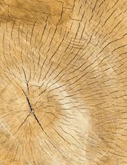 Closeup background of wooden rough cut texture