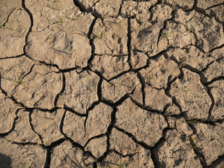 dry cracked ground background, growing plants