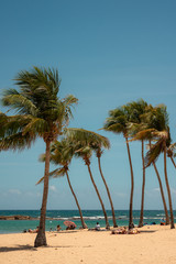 Palm Trees in the Tropic