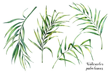 Watercolor set with tropical palm leaves. Hand painted coconut greenery exotic branch on white background. Botanical illustration for design, fabric, print or background.