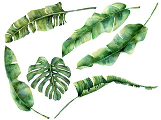 Watercolor set with juicy tropical tree leaves. Hand painted monstera, banana and palm greenery exotic branch on white background. Botanical illustration for design, fabric, print or background.
