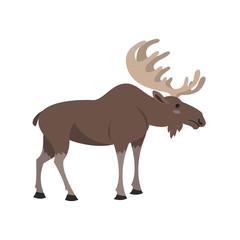 Cute elk on white background.