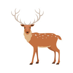 Cute deer on white background.