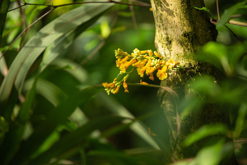 Beautiful bush of yellow flowers on a tree trunk in the middle the jungle