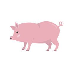 Cute pig on white background.