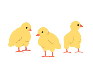 Set of cute cartoon chickens on white background.