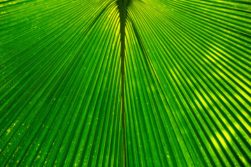 Geometric abstract background texture formed by a hue green palm tree leaf