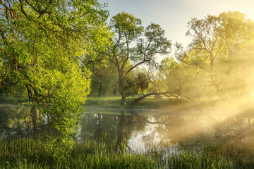 beautiful summer landscape of green trees along picturesque banks of river on sunny morning. rays of sunlight through fog and branches of trees. Nature of wild jungle in the morning sunbeams. Sun rays