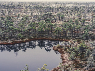 Pine Trees in Field of Kemeri moor in Latvia with a Pond in a Foreground - vintage look edit