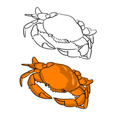 orange round crab vector illustration sketch doodle hand drawn with black lines isolated on white background
