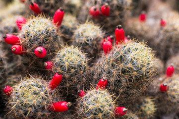 Close up of colorful cactus plant