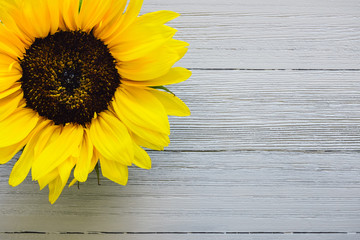 Yellow Sunflower on White Table